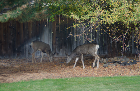 The two fawns