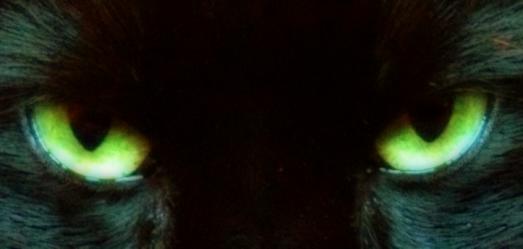 Cat Eyes 1