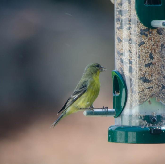 20140525-Birds00019