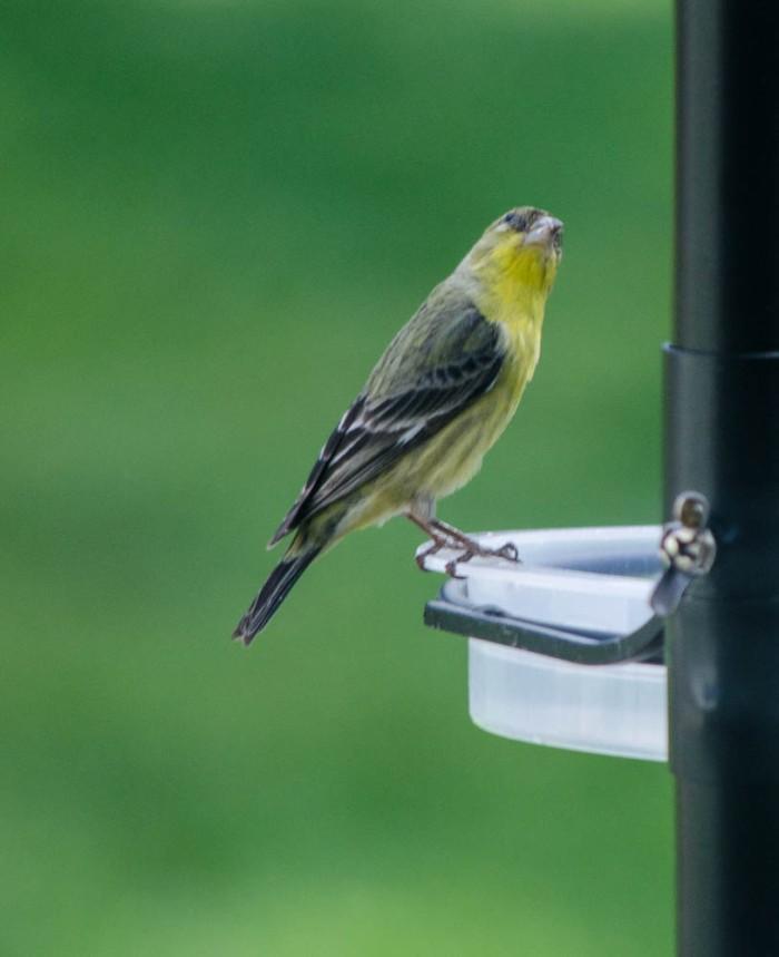 20140525-Birds00022