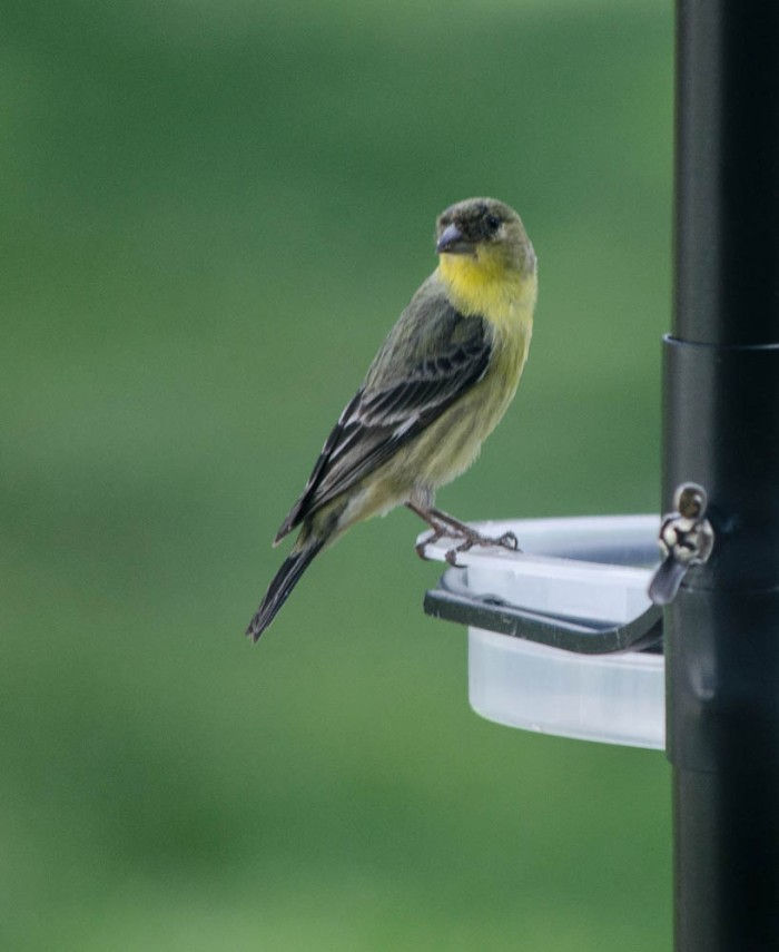 20140525-Birds00024