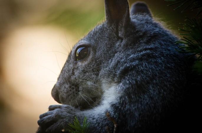20140605-Squirrel00005