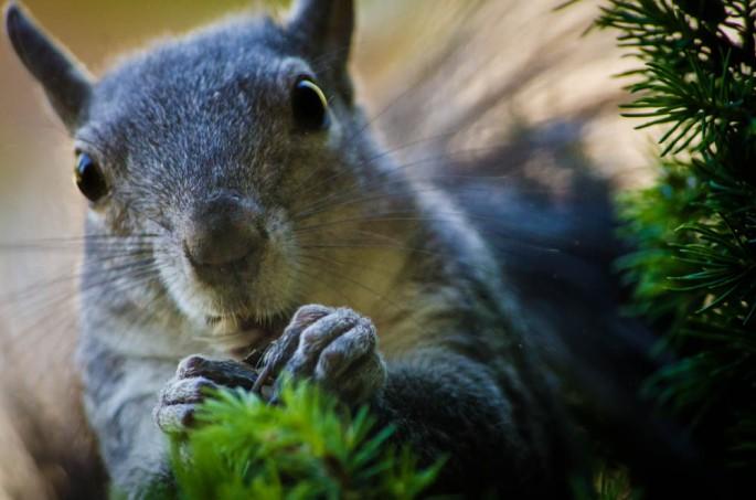 20140605-Squirrel00007