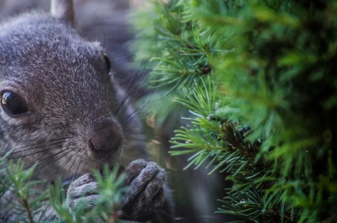 20140605-Squirrel00008