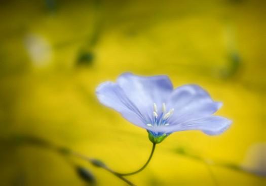 20140606-Flowers00031-2