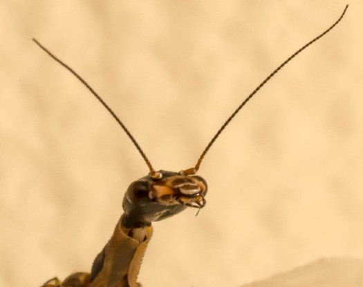 20140610-Insect00012