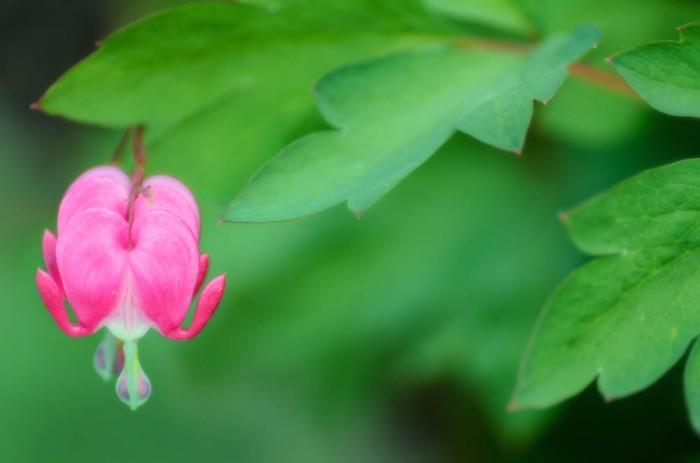 20140613-Flowers00007