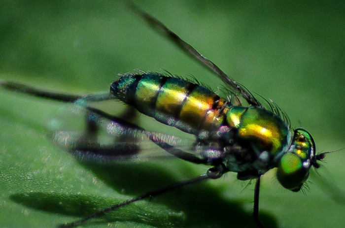 20140613-Insects00025