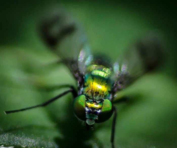 20140613-Insects00029