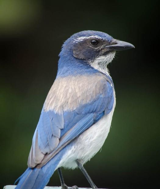 20140614-Birds00008