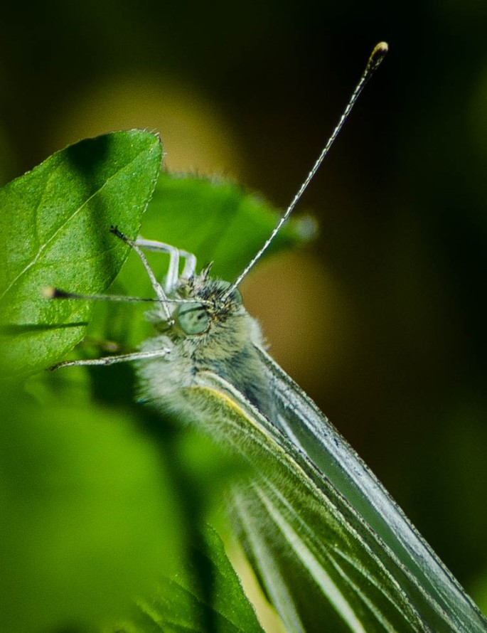 20140628-Insects-00014-2