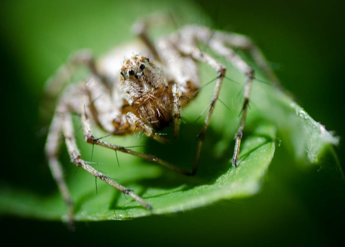 20140628-Insects-00037