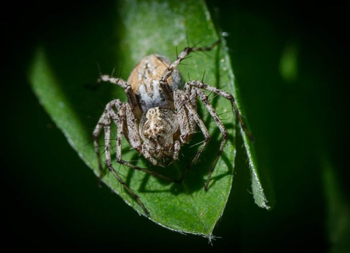 20140628-Insects-00042