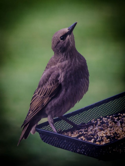 20140614-Birds00001