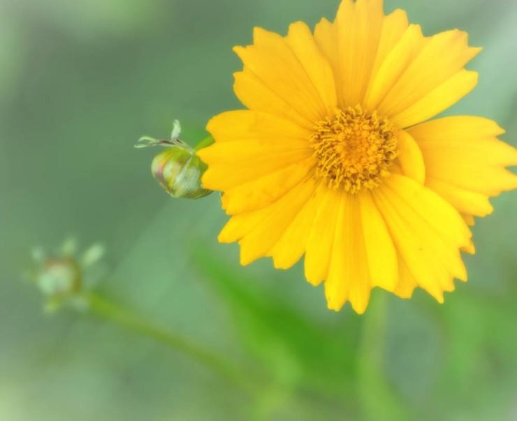 20140703-Flowers-00041
