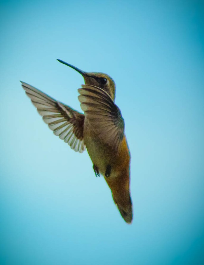 20140704-Hummingbird-00010