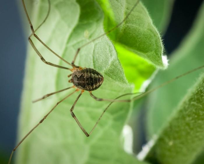 20140705-Spider-00011