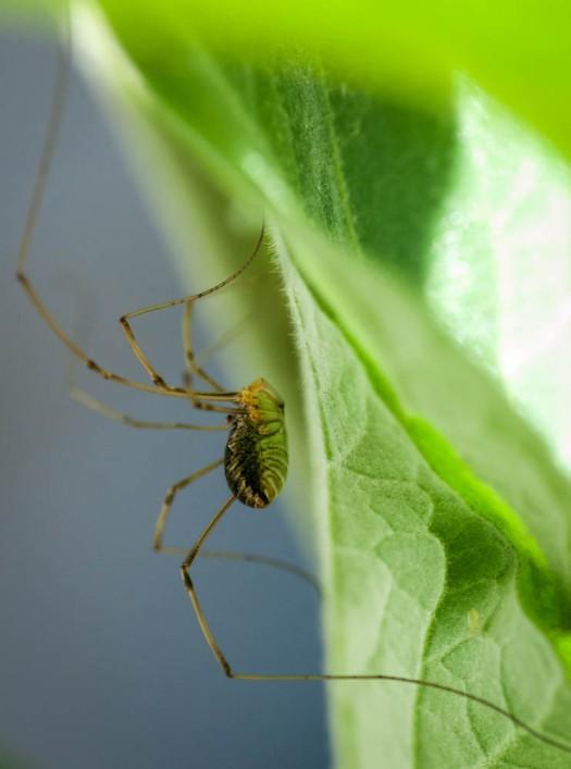 20140705-Spider-00019