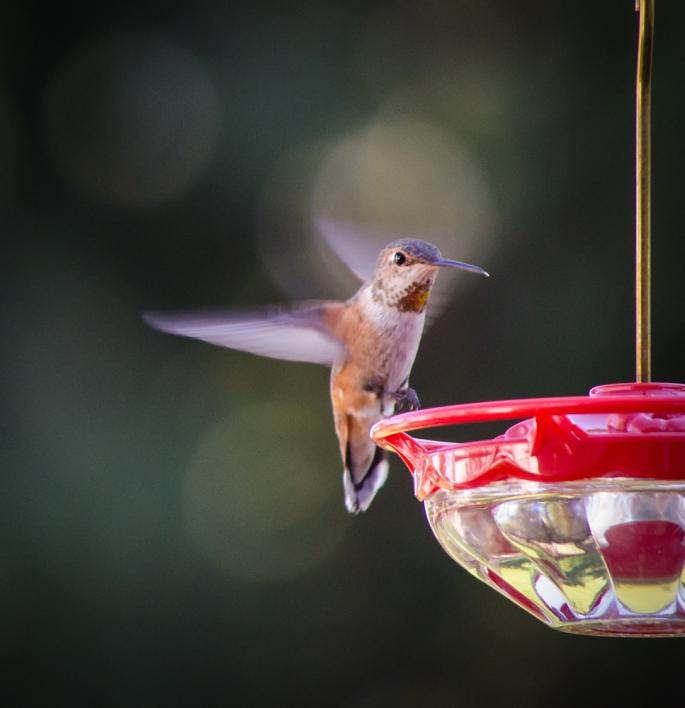 20140706-Hummingbirds-00122