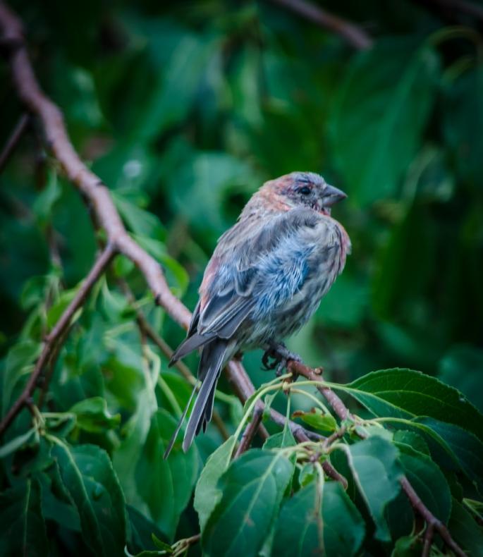 20140812-Birds-00172