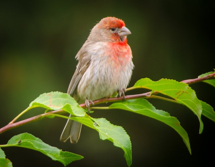 20140812-Birds-00182