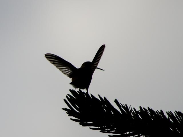 20140815-Birds-00184