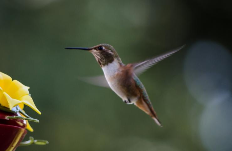 20140815-Birds-00196