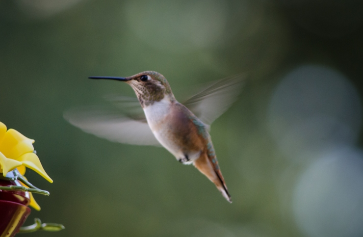 20140815-Birds-00198