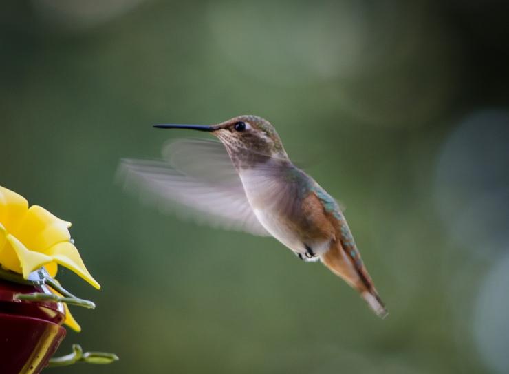 20140815-Birds-00199
