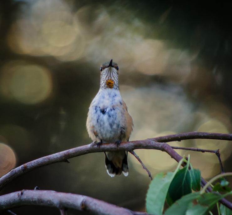 20140809-Birds-00135