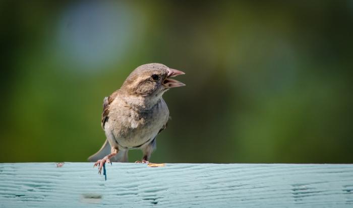 20140810-Birds-00160