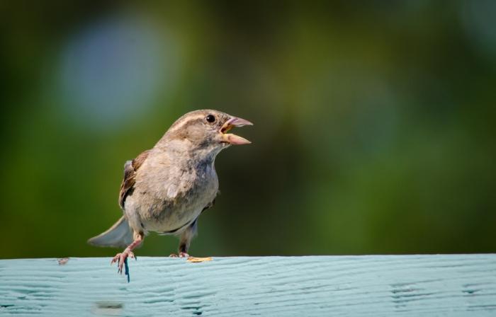 20140810-Birds-00161