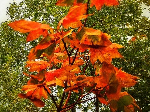 Tangled Leaves