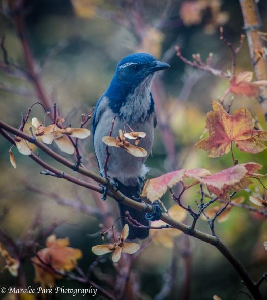 Birds-4533October 14, 2014
