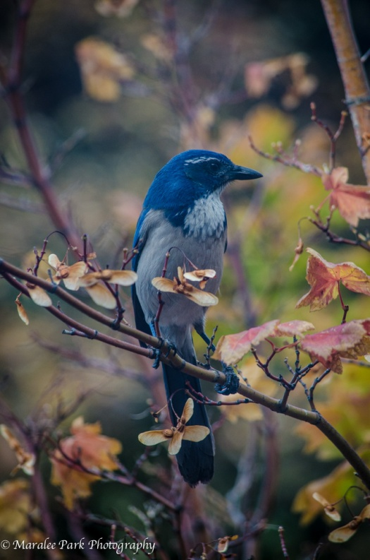 Birds-4534October 14, 2014