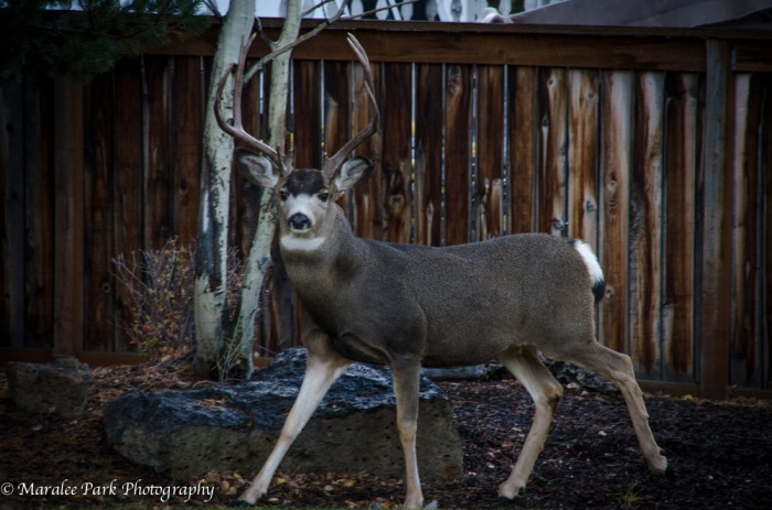 Buck-5203October 28, 2014