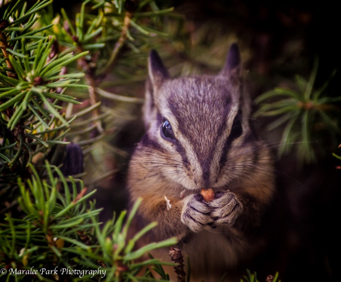Chipmunk-4531October 14, 2014