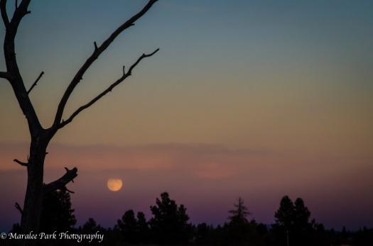 Moon-3761October 07, 2014