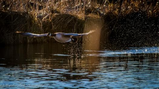 Birds-7310December 26, 2014