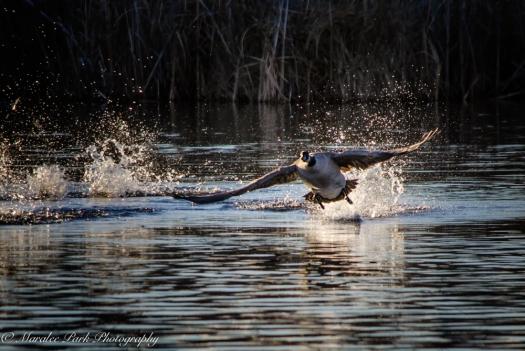 Birds-7322December 26, 2014