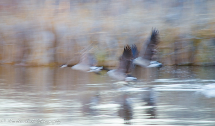 Birds-7404December 26, 2014