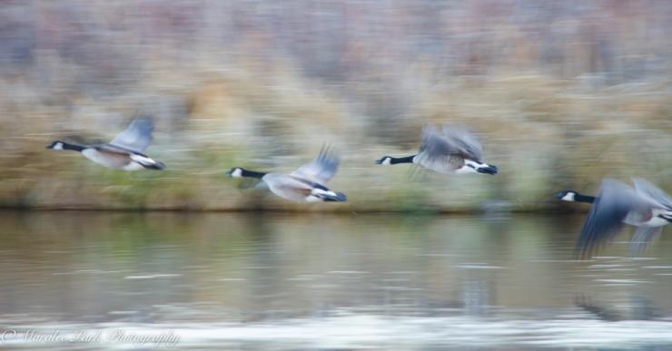 Birds-7407December 26, 2014