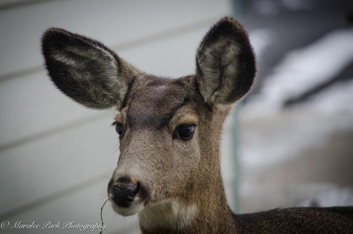 Deer-7437December 27, 2014