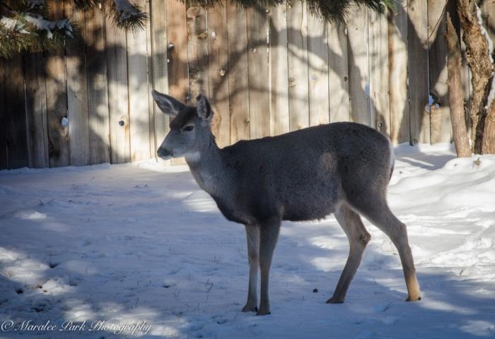 Deer-7488December 31, 2014