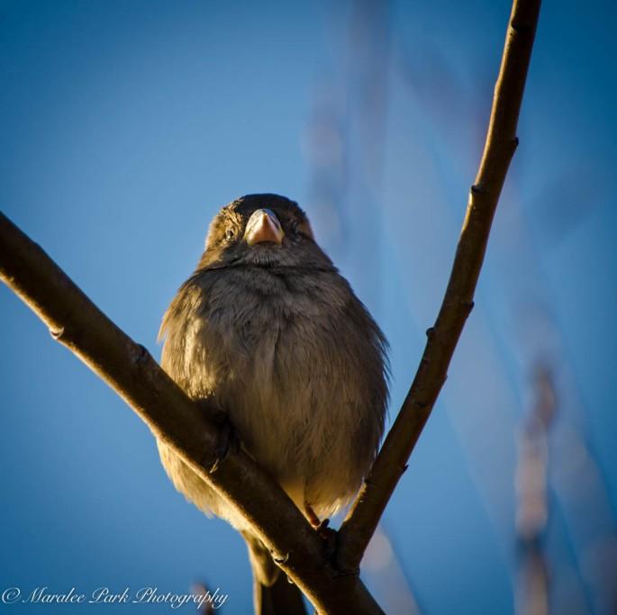 Birds-7343December 26, 2014