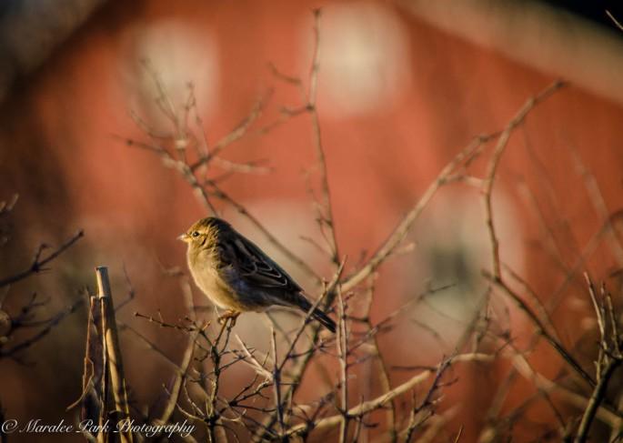 Birds-7346December 26, 2014