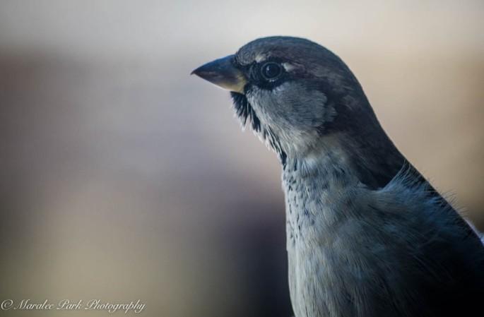 Birds-7469December 29, 2014