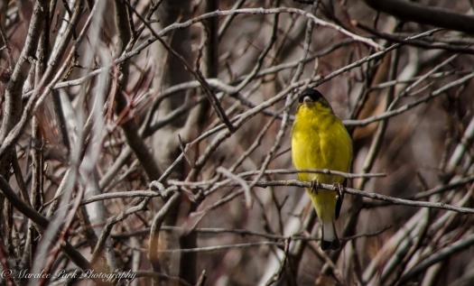 Birds-9365February 19, 2015