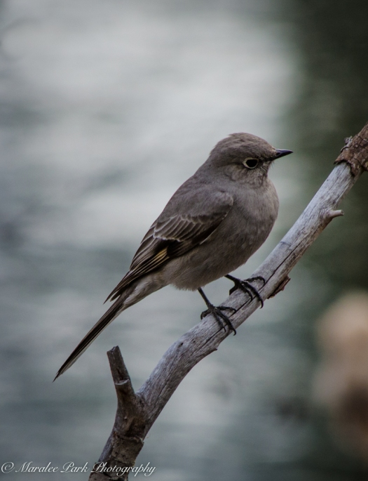Birds-9384February 25, 2015