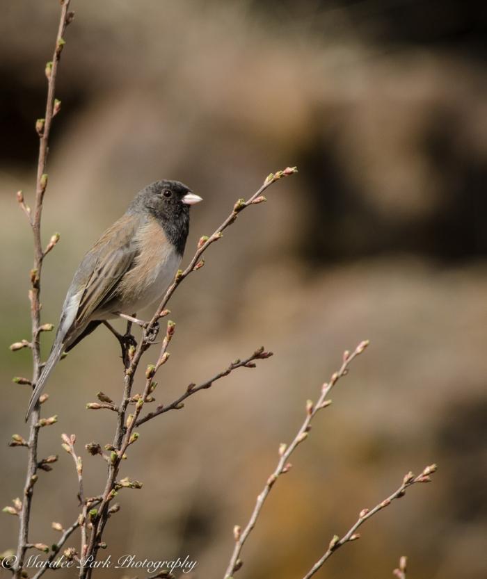 Birds-9389February 26, 2015